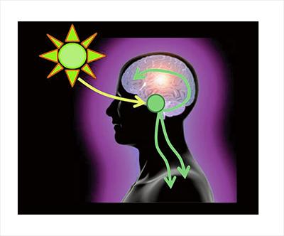 Circadian Rhythms for Brain Fitness